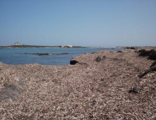 Biogas e compostaggio dalla Posidonia